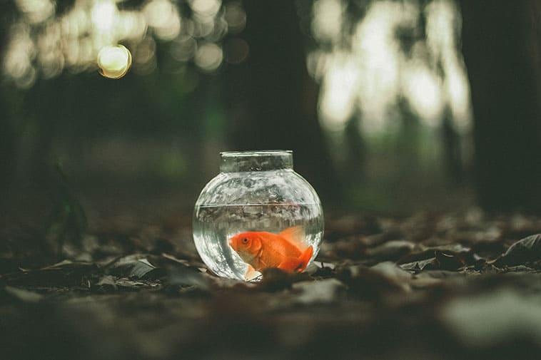 היו שלום ותודה על הדגים - החידון המלא